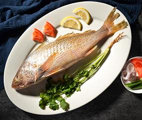 南美大黄鱼