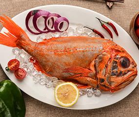 新西兰短命鱼